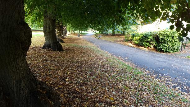 autumn-walks